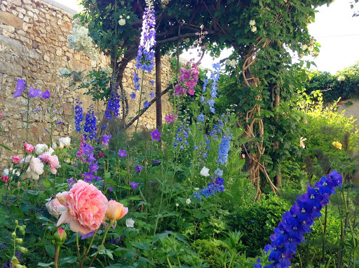 Rosier Glamis castle (David Austin) et mixed border delphiniums
